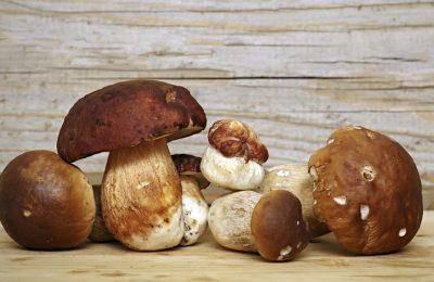 I Funghi: meraviglie e delizie della Natura
